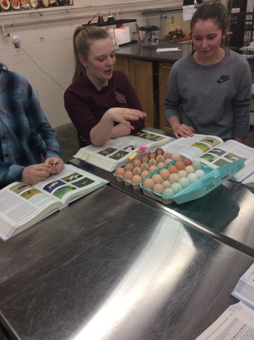 Vet students look at eggs and textbooks